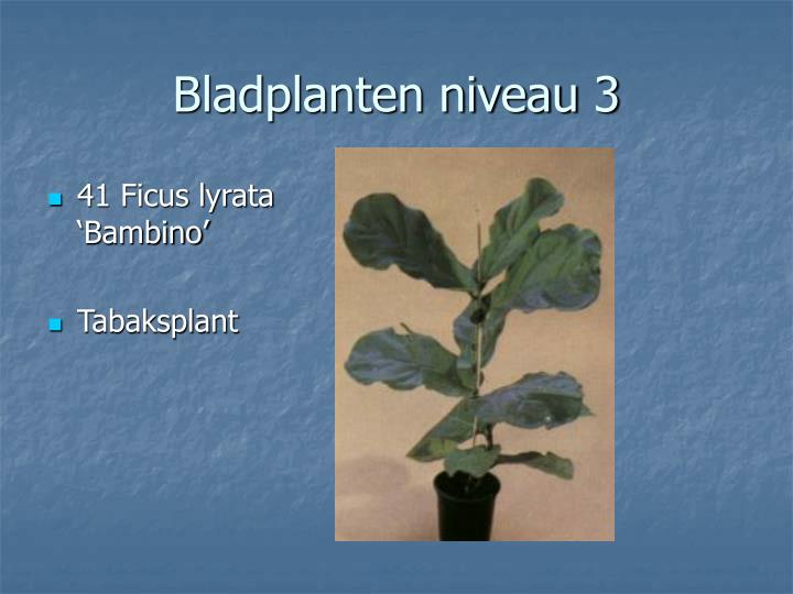 Bladplanten niveau 3