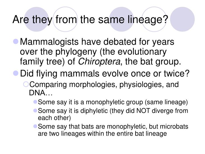 Are they from the same lineage?