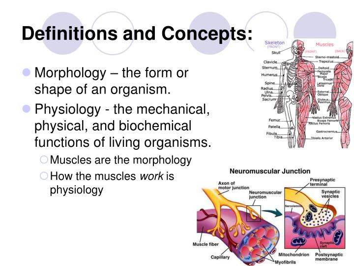 Morphology – the form or shape of an organism.
