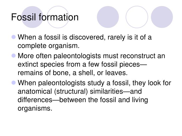 Fossil formation