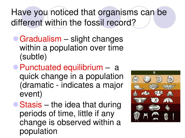 Have you noticed that organisms can be different within the fossil record?