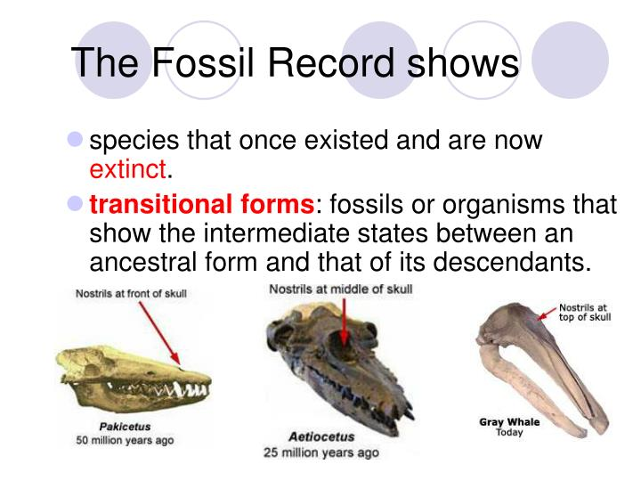 The Fossil Record shows