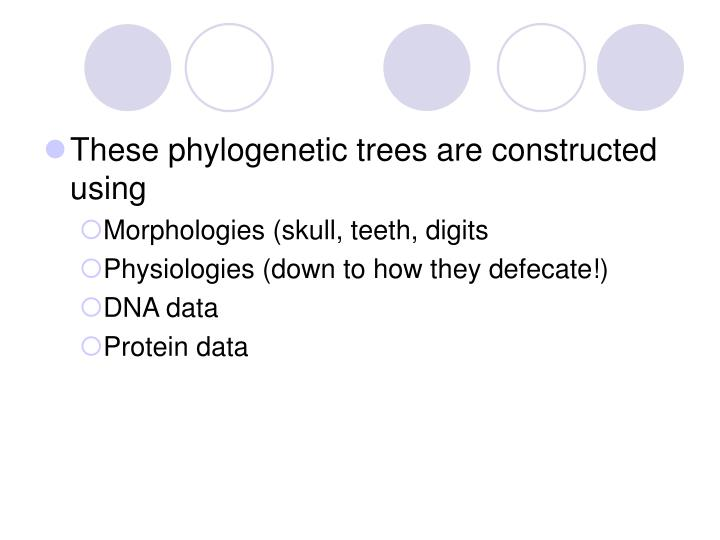 These phylogenetic trees are constructed using