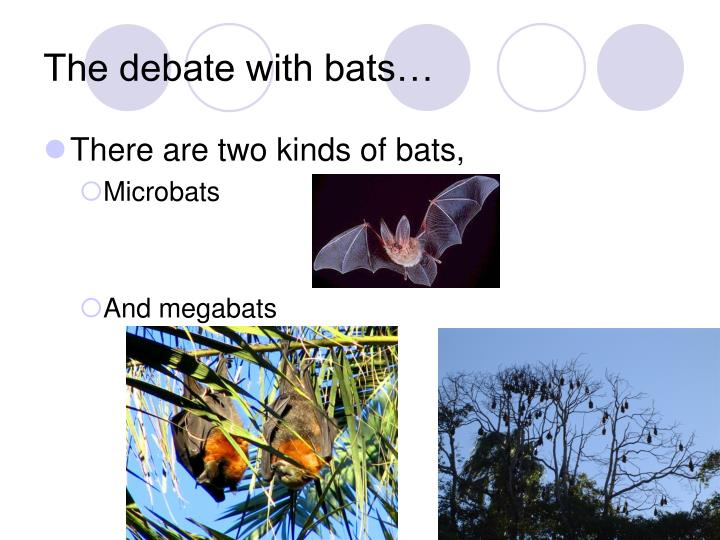 The debate with bats…