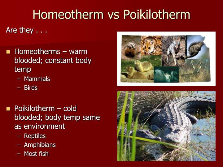 Homeotherm