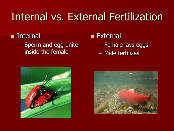 Internal vs. External Fertilization