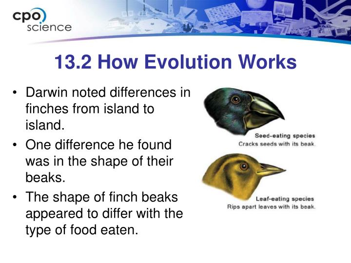 13.2 How Evolution Works