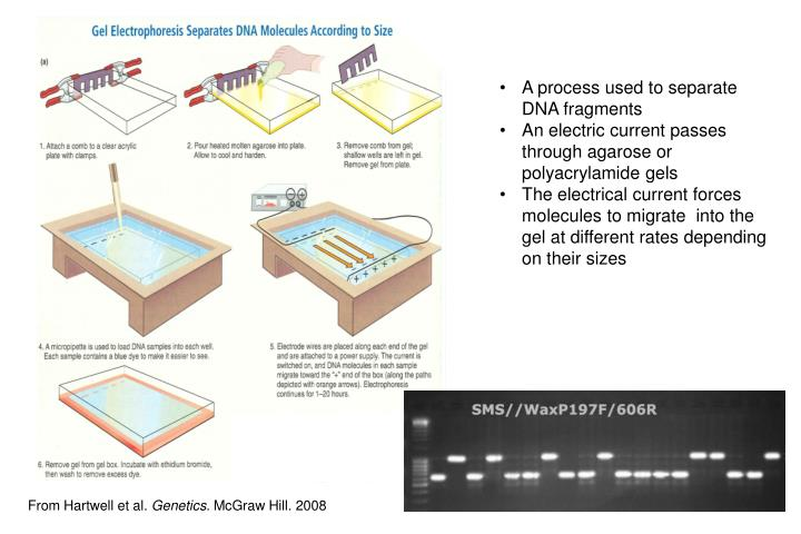 A process used to separate DNA fragments