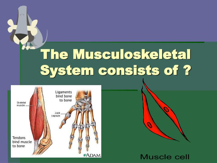 The Musculoskeletal System consists of ?