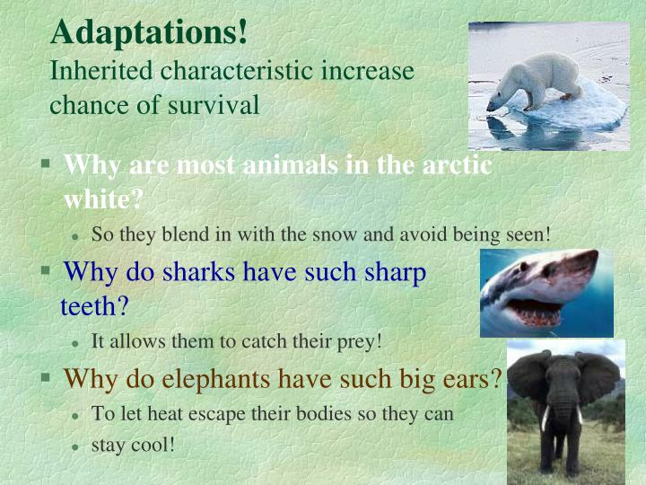 Adaptations!