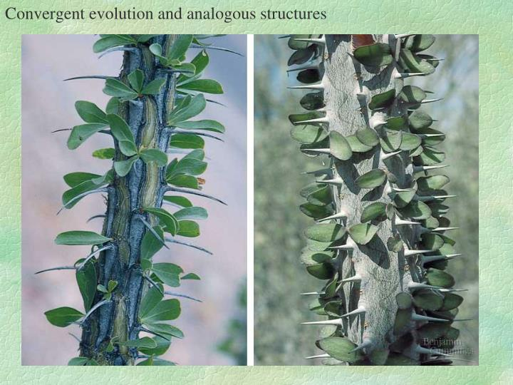 Convergent evolution and analogous structures