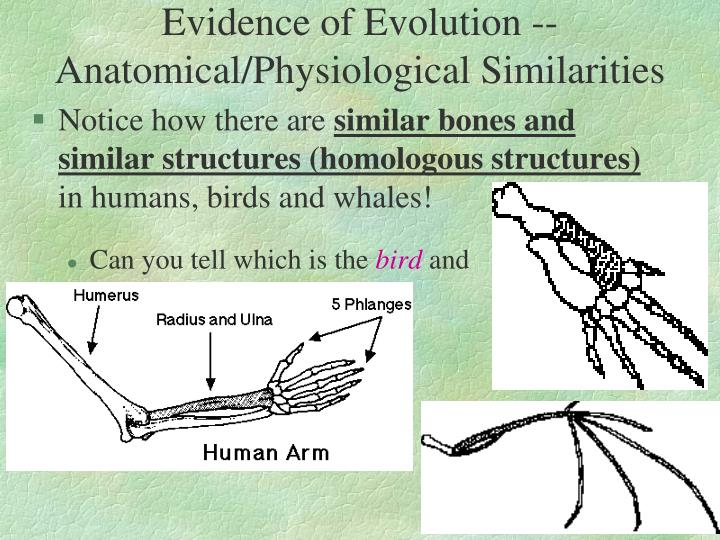 Evidence of Evolution --Anatomical/Physiological Similarities