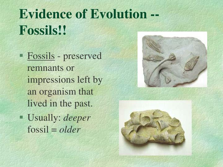 Evidence of Evolution -- Fossils!!