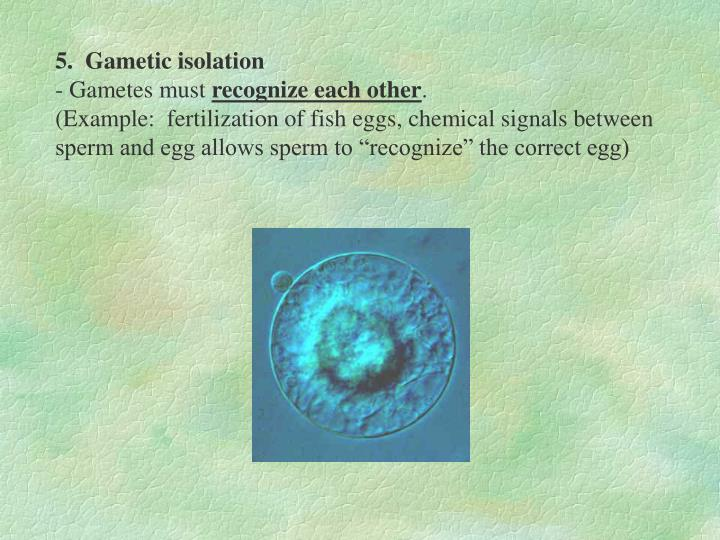 5.  Gametic isolation