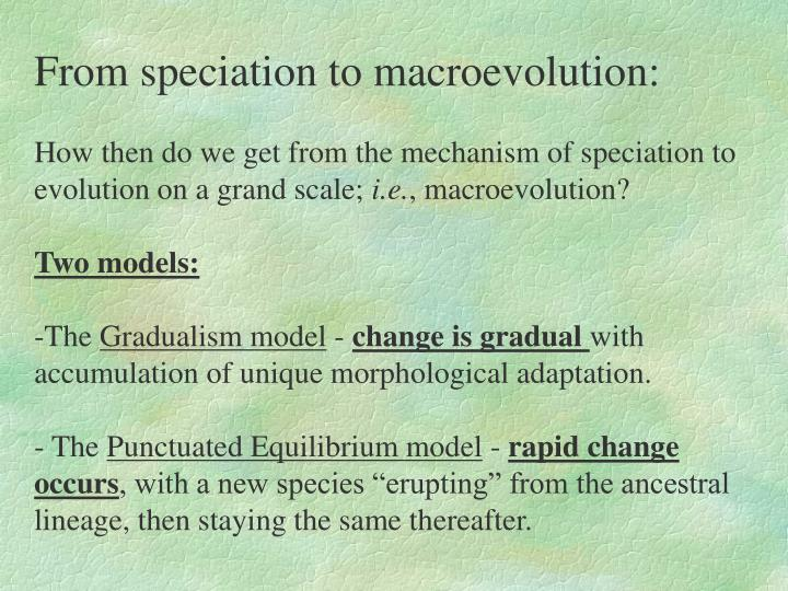 From speciation to macroevolution: