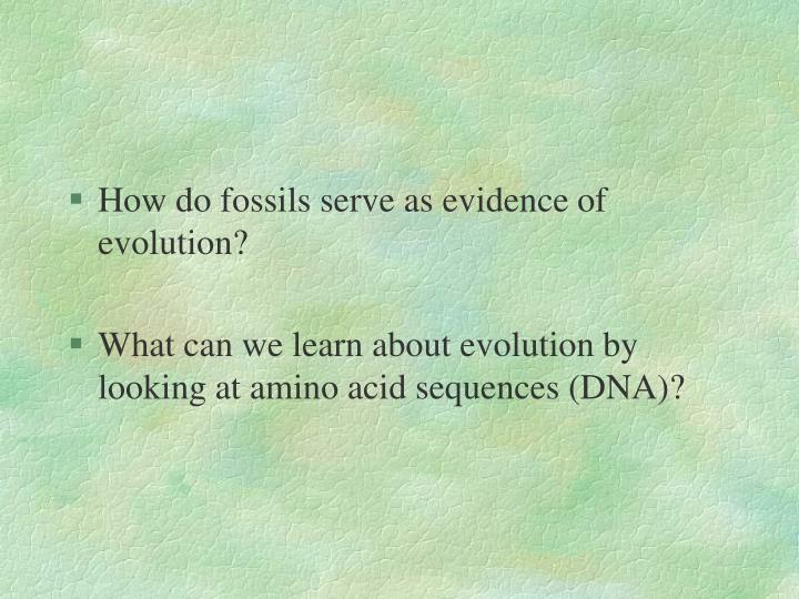How do fossils serve as evidence of evolution?