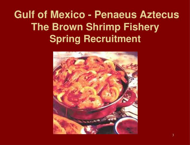 Gulf of mexico penaeus aztecus the brown shrimp fishery spring recruitment