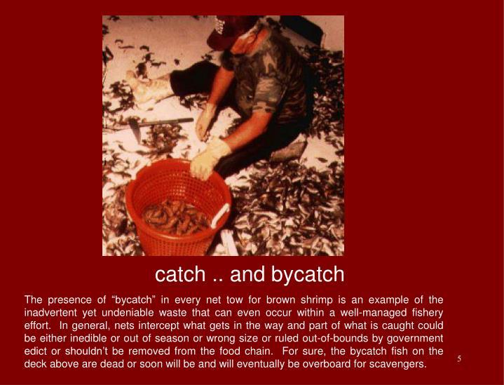 catch .. and bycatch