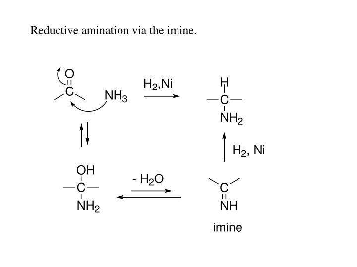 Reductive amination via the imine.