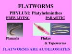 flatworms phylum platyhelminthes