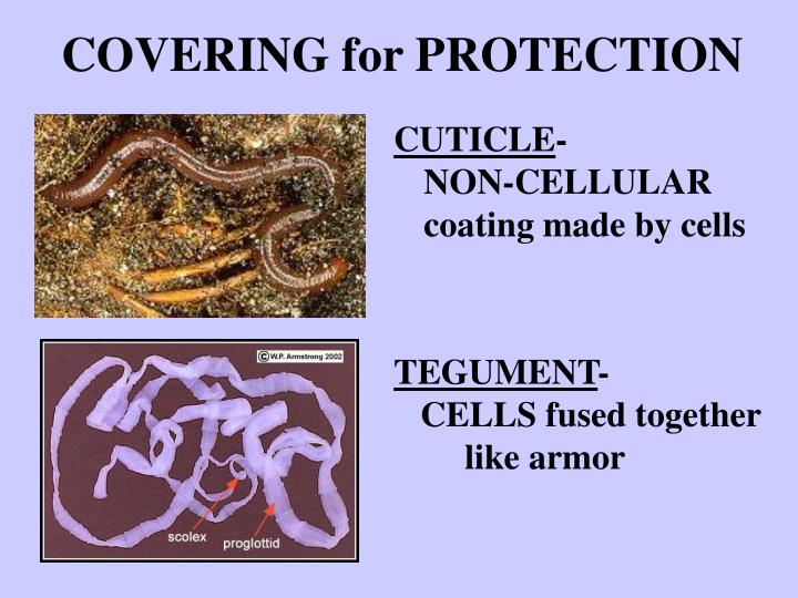 COVERING for PROTECTION