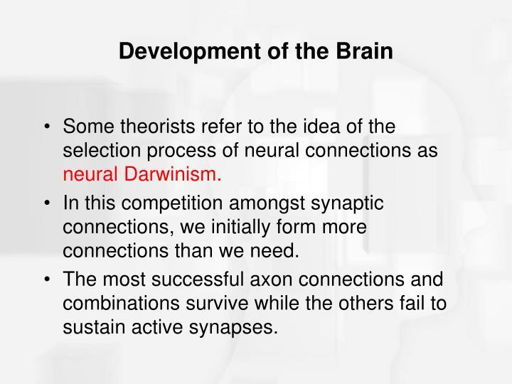 Development of the Brain