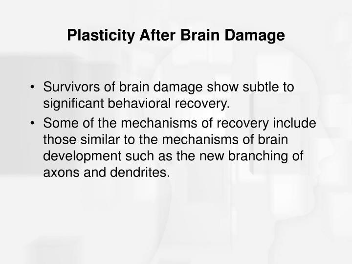 Plasticity After Brain Damage
