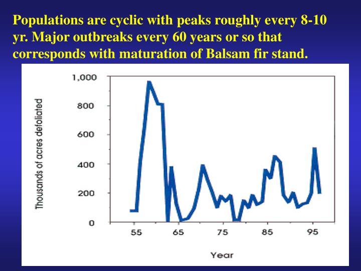 Populations are cyclic with peaks roughly every 8-10 yr. Major outbreaks every 60 years or so that corresponds with maturation of Balsam fir stand.