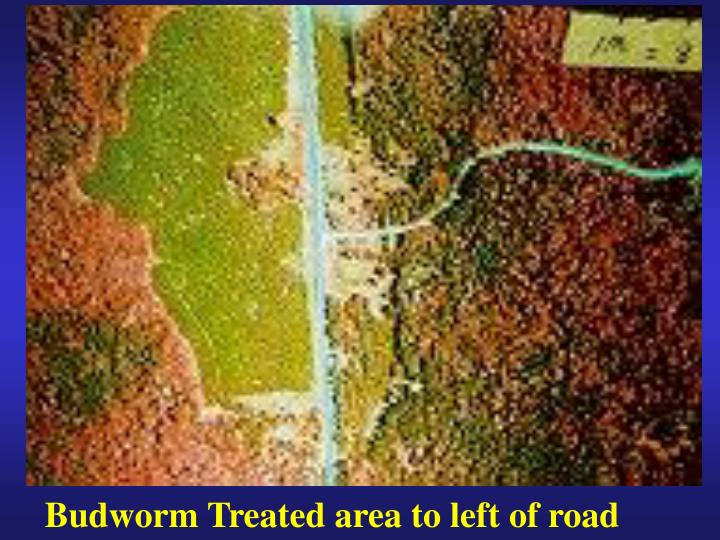 Budworm Treated area to left of road
