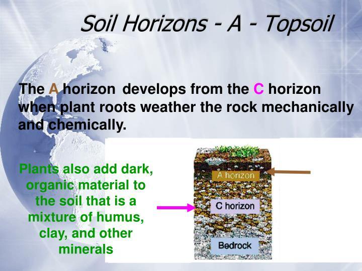 Soil Horizons - A - Topsoil