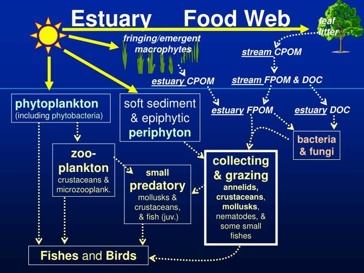 Estuary     Food Web
