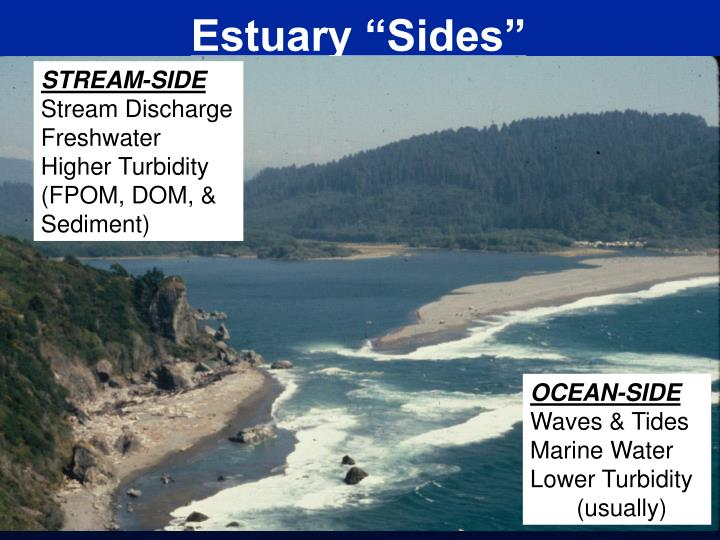 "Estuary ""Sides"""
