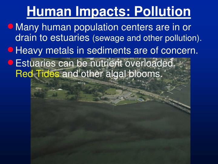 Human Impacts: Pollution