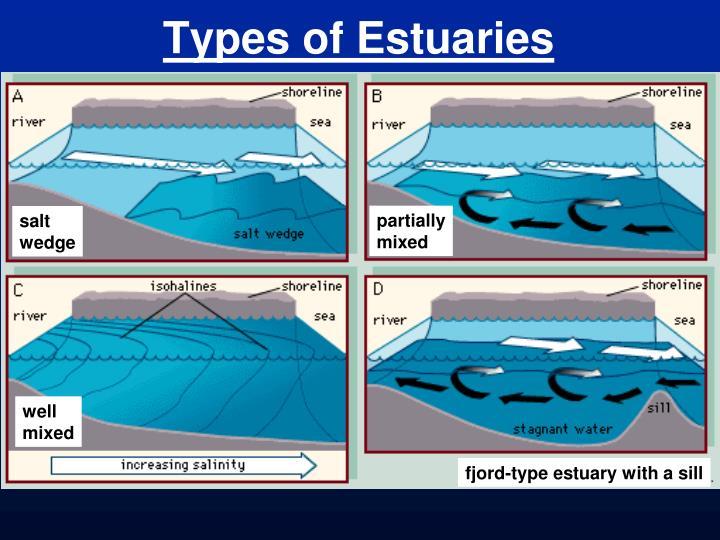 Types of Estuaries