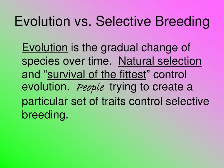Ppt - Evolution Vs  Selective Breeding Powerpoint Presentation