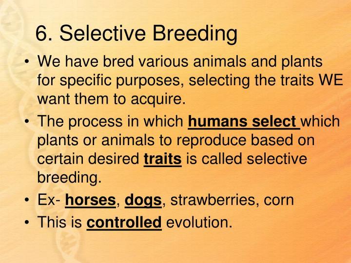 6. Selective Breeding