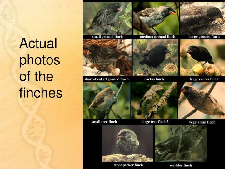 Actual photos of the finches