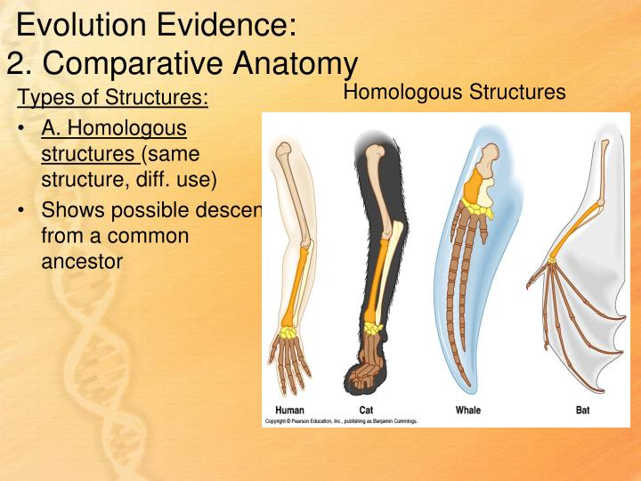 Evolution Evidence: