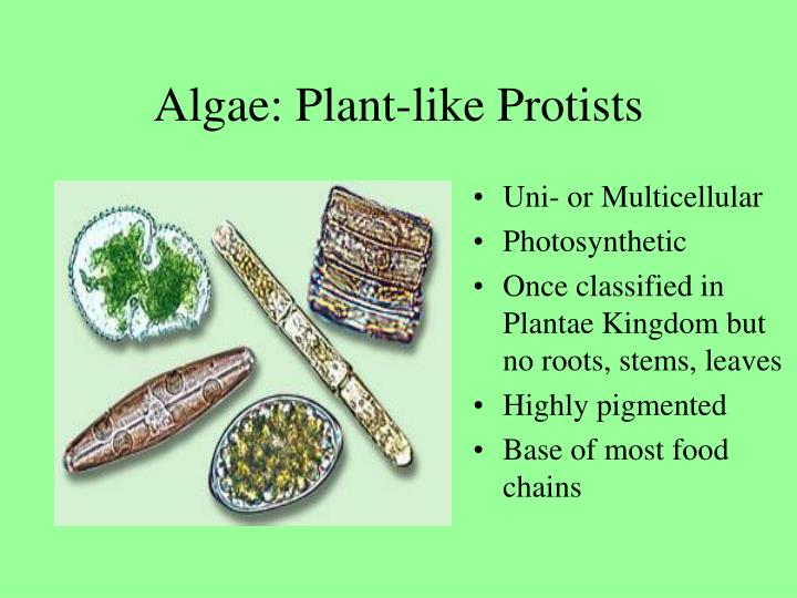 Algae: Plant-like Protists