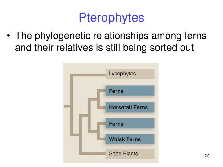 Pterophytes
