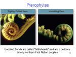 pterophytes5