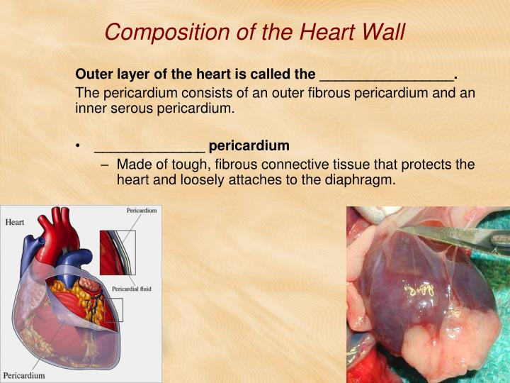 Composition of the Heart Wall