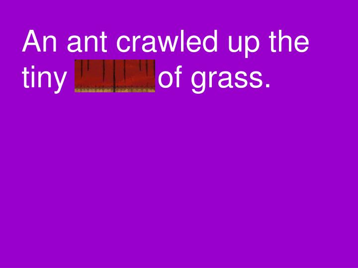 An ant crawled up the tiny blade of grass.