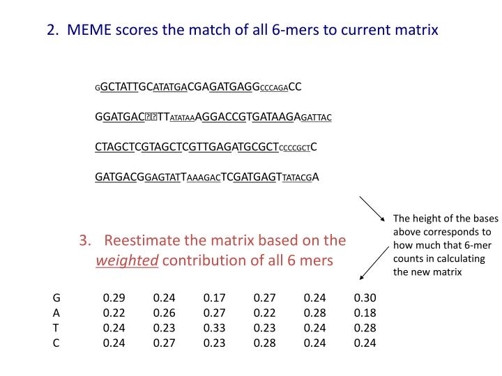 2.  MEME scores the match of all 6-mers to current matrix