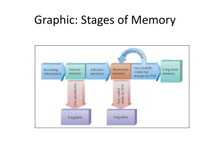 Graphic: Stages of Memory