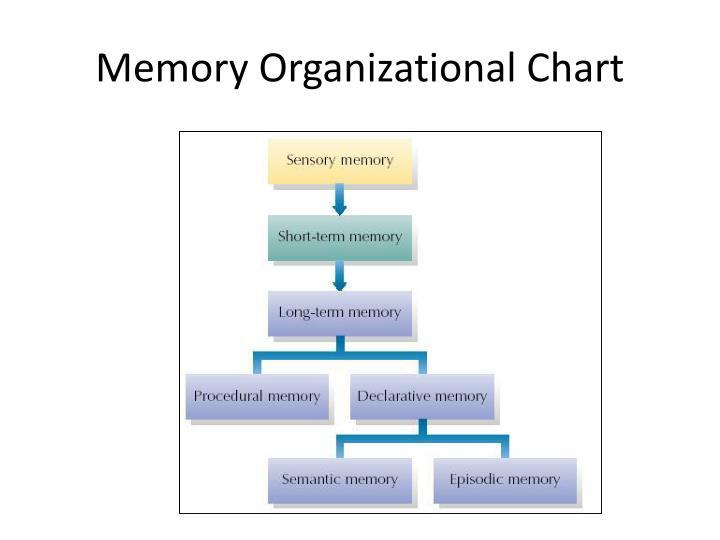 Memory Organizational Chart