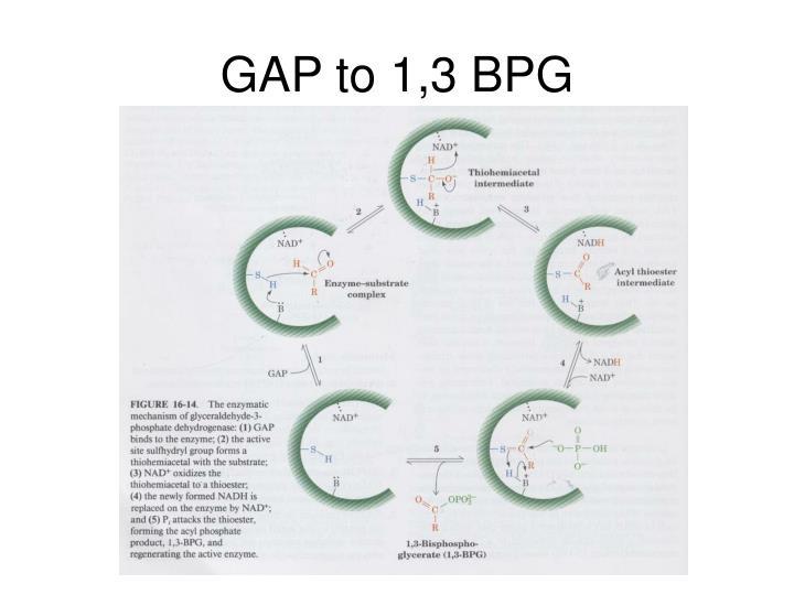 GAP to 1,3 BPG