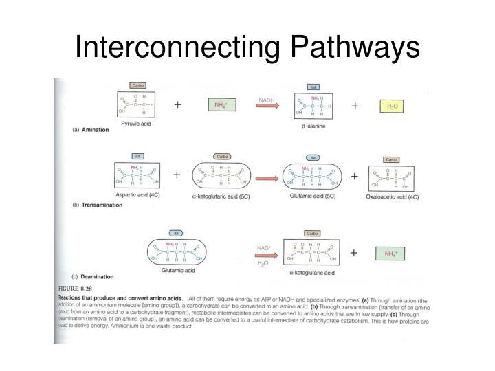 Interconnecting Pathways
