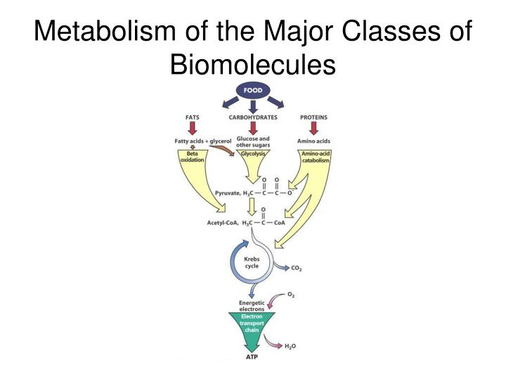 Metabolism of the Major Classes of Biomolecules