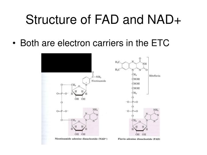 Structure of FAD and NAD+
